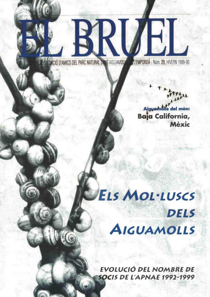 Bruel 29. Hivern 1999-00